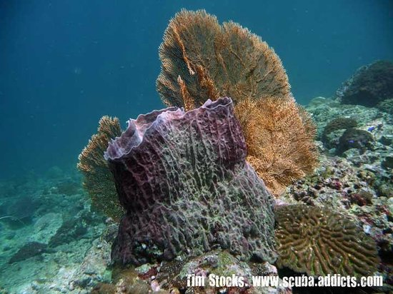 Scuba Addicts: Barrel Sponge