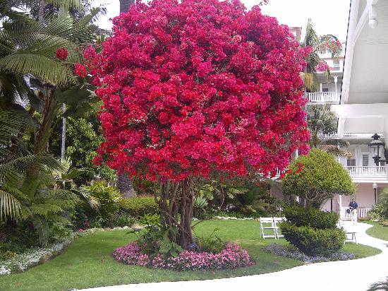 Hotel del Coronado: Courtyard 2