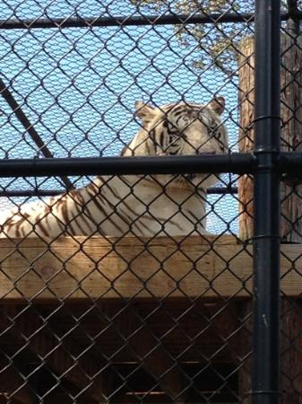 Natural Bridge Zoo : animal cruelty!