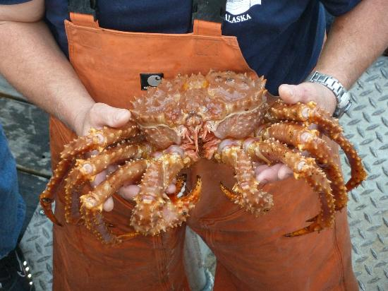 Bering Sea Crab Fishermen's Tour: crab