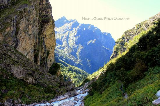 beautiful VOF - Picture of Valley of Flowers National Park ...