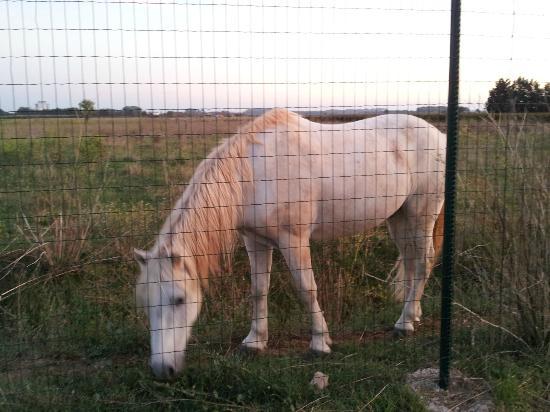 Jasses De Camargue: A hungry Horse