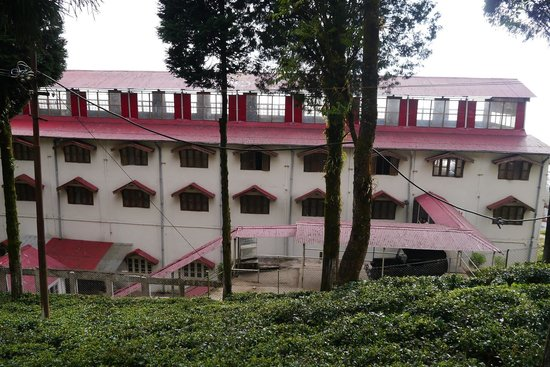 Happy Valley Tea Estate: The estate