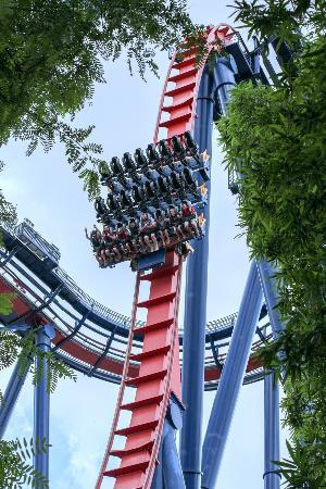 Busch Gardens Tampa: The main 90 degree drop on Sheikra
