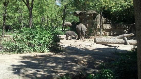 St. Louis Zoo: Kenzi the Baby Elephant
