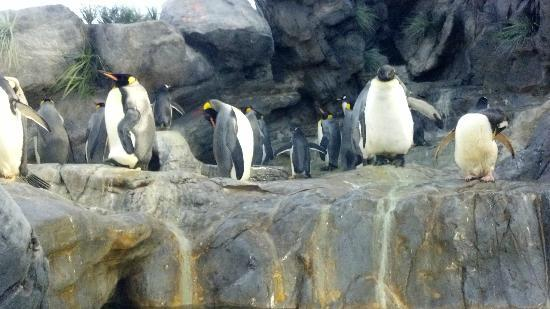 St. Louis Zoo: Penguins