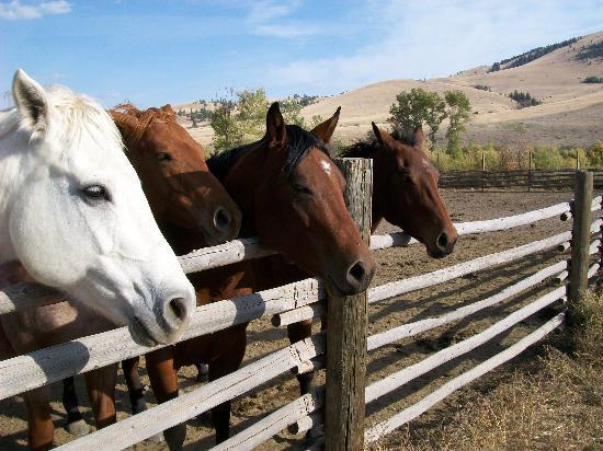 Rocking Z Guest Ranch: meet your neighbours