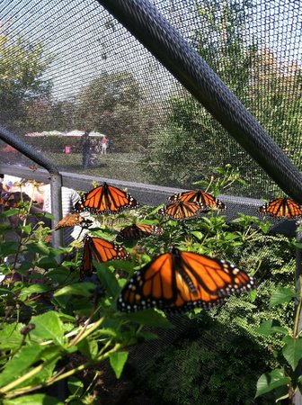 ‪All-A-Flutter Butterfly Farm‬
