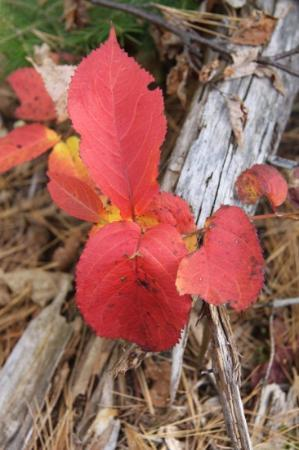 Gunflint Lodge & Outfitters: fall colors