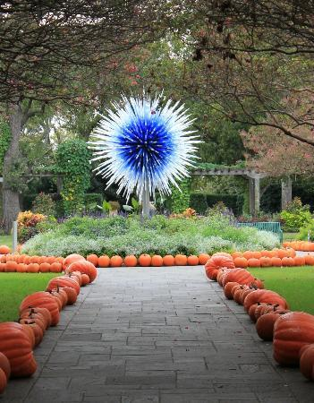 Dallas Arboretum U0026 Botanical Gardens: Chihuly Exhibit