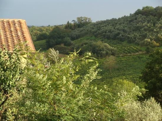 Agriturismo le Caggiole: Another view of the surrounding vineyards