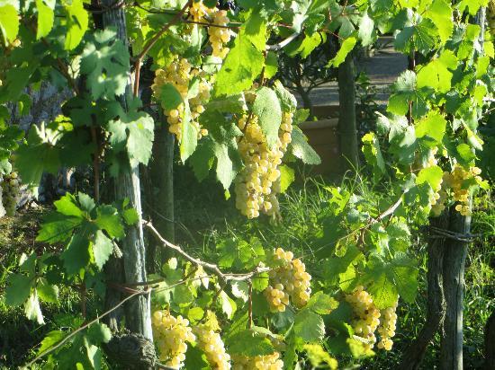 Da Gelsomina: Beautiful winery
