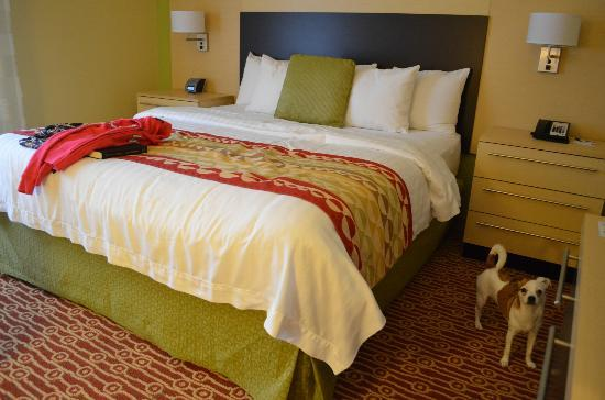 TownePlace Suites Williamsport: It's Petfriendly!