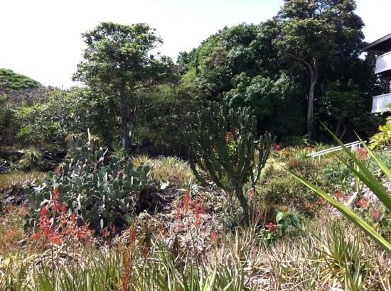Moir Gardens: succulents in bloom and Euphorbia in the Garden.