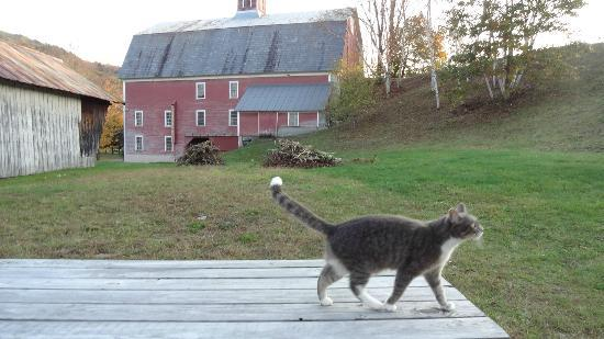 Farmhouse Inn at Robinson Farm: Tilly - the welcoming cat