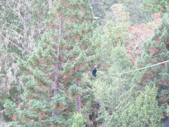Sonoma Canopy Tours: flying through the treetops!