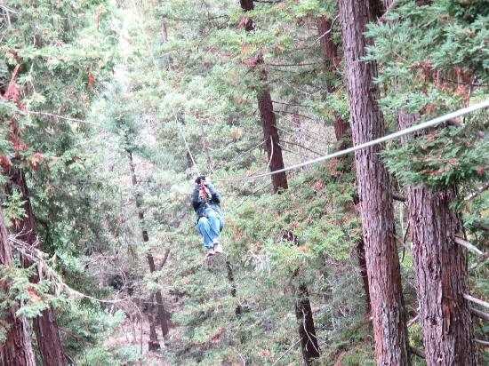 Sonoma Canopy Tours: coming in for a landing!