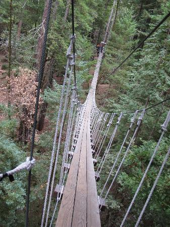 Sonoma Canopy Tours: bridge