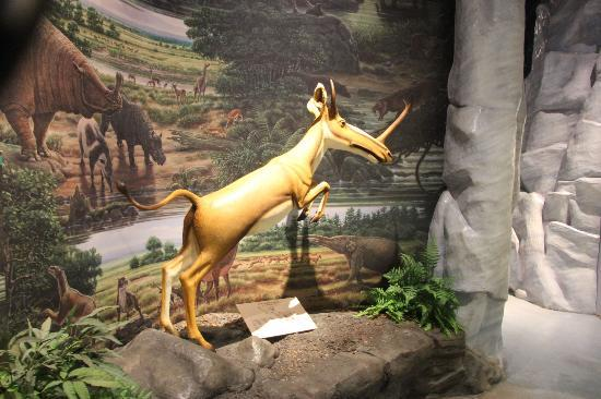 Kenosha Public Museum: Early Mammal
