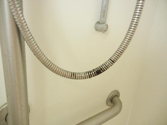La Quinta Inn & Suites Birmingham Homewood: Mold on shower hose in handicap room - disgusting