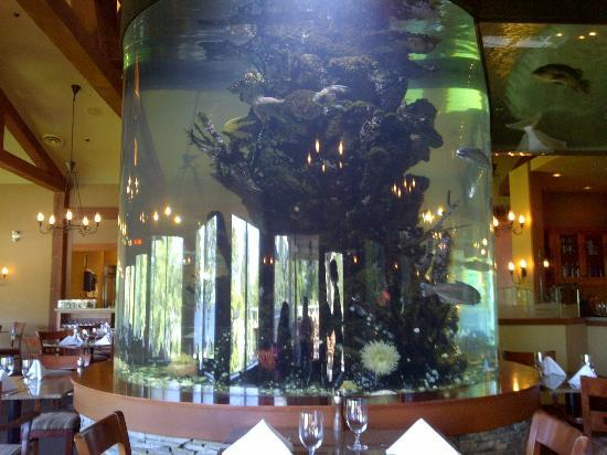 Pacific Shores Resort and Spa: Aquarium in the dining room