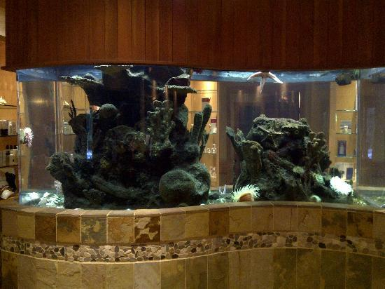 Pacific Shores Resort and Spa: The aquarium in the spa