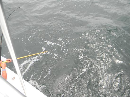 PV Sportfishing: This pic is of Roy Eise, just about to pull his first Large Yellow Fin Tuna in. It's almost ther