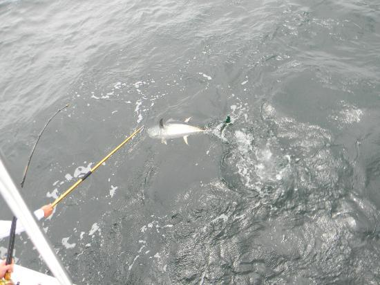 PV Sportfishing: This is Roy's fist catch of Yellow Fin Tuna! What a fight it put up, but Roy wasn't giving up.