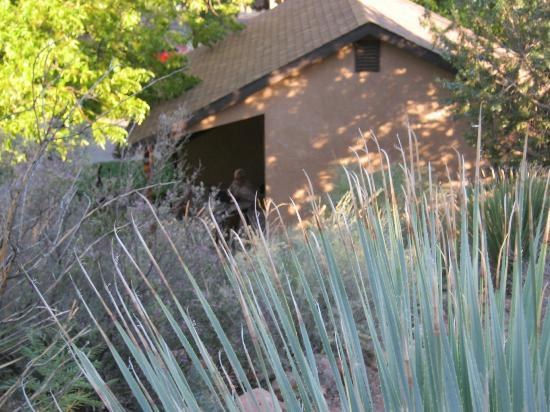 Red Rock Inn Bed and Breakfast Cottages: view of the room from the the cactus garden