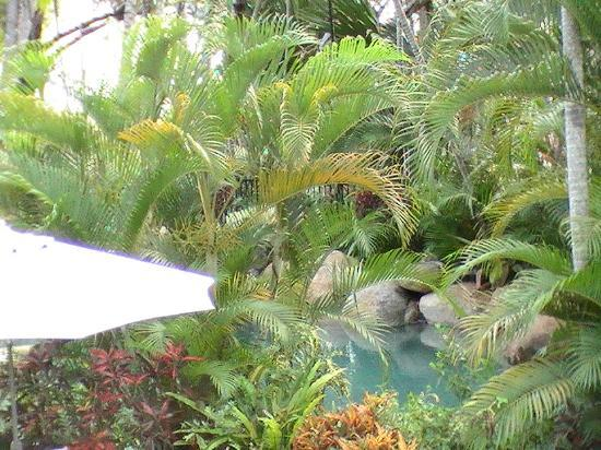 Melaleuca Resort Palm Cove: View through to the pool