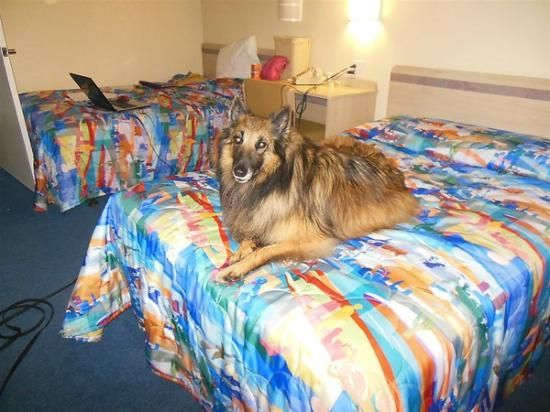 Motel 6 New London - Niantic: My dog Vinnie loves to stay at the Motel 6.