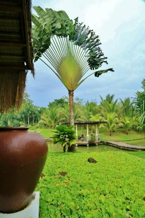 Rafael Farms Garden Restaurant: banga and giant palm tree