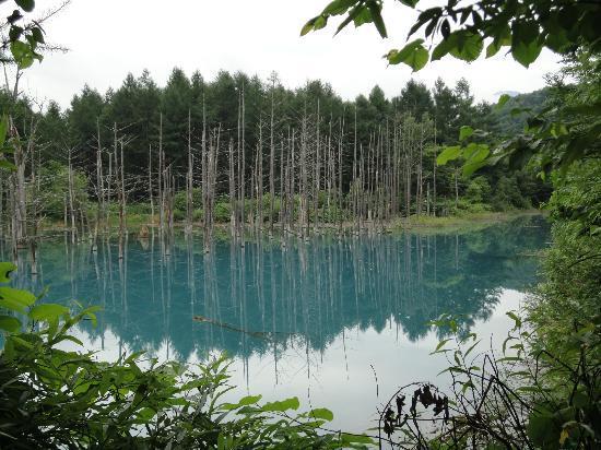 Blue Pond : 青い池