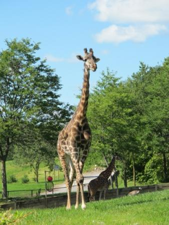 Riverview Park and Zoo : .
