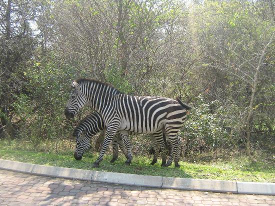 AVANI Victoria Falls Resort: Zumbezi Sun territory