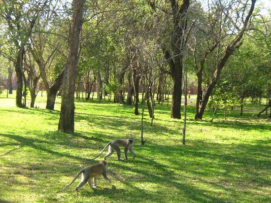 AVANI Victoria Falls Resort: Zambezi Sun territory