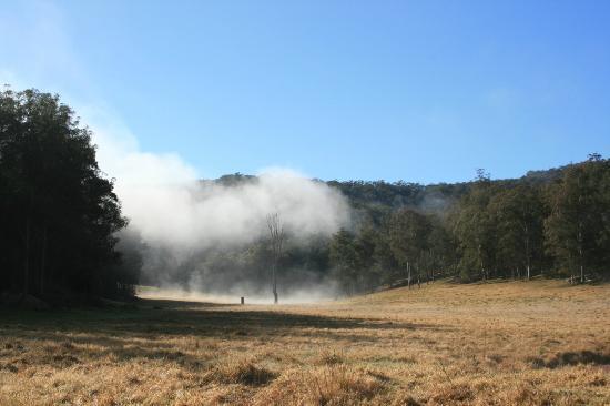 Mystwood: Fog Rising