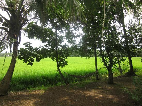 GK's Riverview Homestay: Looking over the rice fields