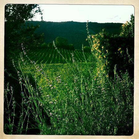 Rocca di Cispiano: Lavender 