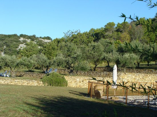 La Buissonniere : View of olive trees - lots of places to sit throughout the property