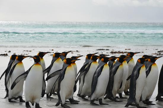East Falkland, Kepulauan Falkland: follow my leader