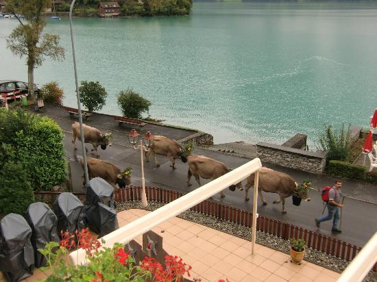 Hotel Bellevue Iseltwald: Morgens vor dem Hotel