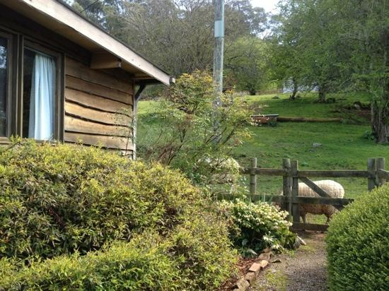 Mole Creek Cabins: mole creek holiday village