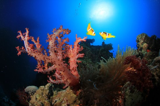 Sinai Divers Dahab: Rich Carey photography (**highly recommended**)