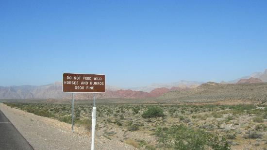 Scoot City Tours: We didn't see any wild horses..or burros for that matter