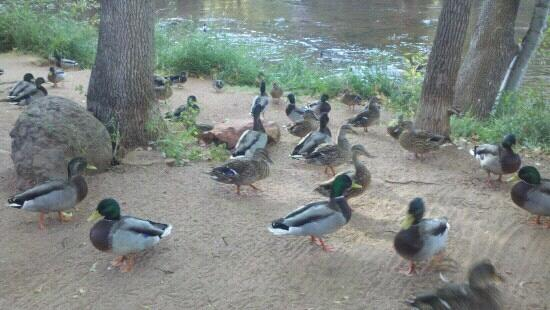 L'Auberge de Sedona: Feeding the ducks in the morning