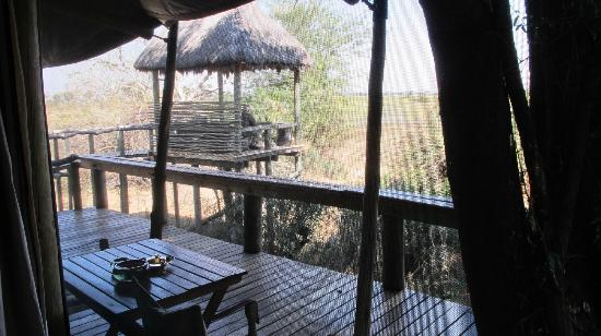 Wilderness Safaris Mombo Camp : our viewing deck