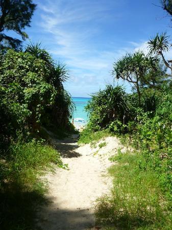 Aharen Beach: ビーチに抜ける道