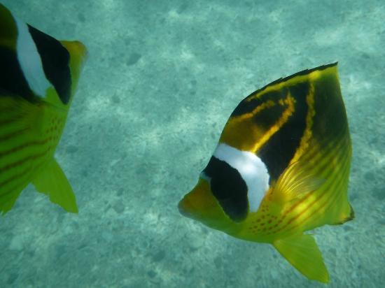 Aharen Beach: 魚