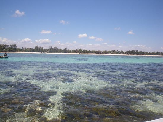 Diani Blue: Reef in front of hotel with millions of fishes!